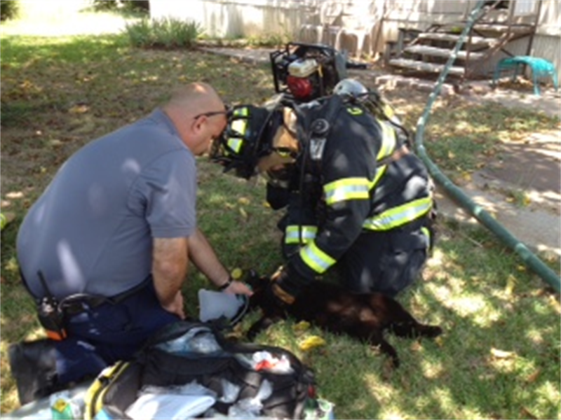 Firefighters Helping a Cat